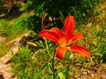 Profundidad de la flor del campo fotos de archivo
