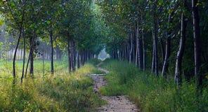 Profundidades del bosque Foto de archivo libre de regalías