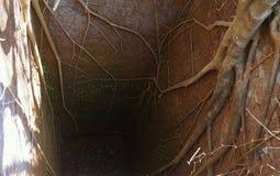 Profundo antiguo bien con las raíces del árbol de banyan Imagenes de archivo