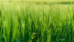 profundo - folha verde na luz do verão para fundos ou texturas foto de stock