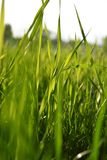 Profundo - grama verde no campo imagens de stock