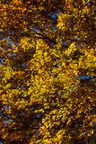 Profusion of colorful fall foliage Royalty Free Stock Photo