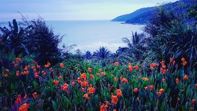 Poppies field and sea in Da Nang Vietnam stock photography