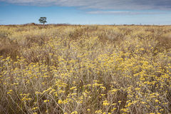 Profusion of flowers in the cerrado biome. Serra da Canastra Nat. Ional Park stock images