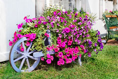Profusion of petunias. Small town store with painted wagon flower planter Stock Photography