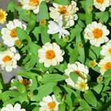 Profusion white Royalty Free Stock Images