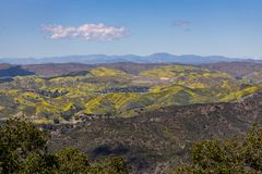 Springtime Panorama of Santa Monica Mountains showing a profusion of wild mustard. A profusion of wild mustard covers areas that had been burned in recent stock photography