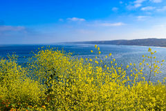 Profusion of Yellow Wildflowers and Ocean View. The drought ending abundant winter rains provided a grand showing of wildflowers at La Jolla Cove in San Diego stock image