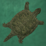 Proganochelys quenstedti Royalty Free Stock Images