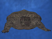 Proganochelys quenstedti Stock Images