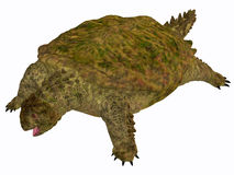 Proganochelys Turtle Body Royalty Free Stock Photos
