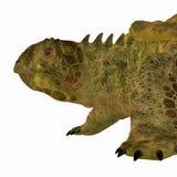 Proganochelys Turtle Head Royalty Free Stock Image