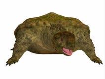 Proganochelys Turtle on White Stock Images