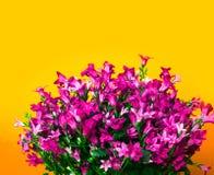 Progettazione astratta del confine dei fiori Immagine Stock Libera da Diritti