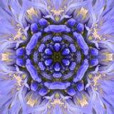 Progettazione concentrica porpora di Mandala Kaleidoscopic del centro del fiore Fotografia Stock