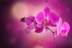 Progettazione del confine del fiore dell'orchidea immagine stock libera da diritti