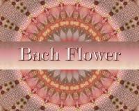 Progettazione del fiore di Bach Immagini Stock Libere da Diritti