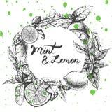 Progettazione del fondo di vettore con il limone e la menta Immagini Stock Libere da Diritti