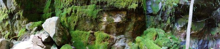 Progettazione del giardino del muschio Immagini Stock