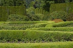 Progettazione del modello del giardino Fotografia Stock