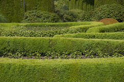 Progettazione del modello del giardino Immagine Stock