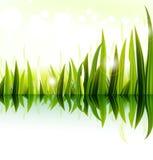 Progettazione dell'erba verde Immagini Stock