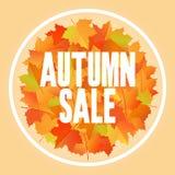 Progettazione dell'insegna di vendita di autunno con le foglie di acero Immagini Stock Libere da Diritti