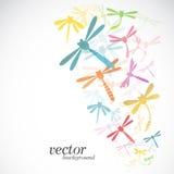Progettazione della libellula su fondo bianco Fotografia Stock Libera da Diritti