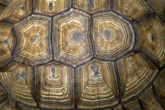 Progettazione della parte posteriore della tartaruga Fotografia Stock Libera da Diritti