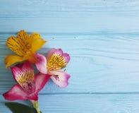 Progettazione di Alstroemeria su un fondo di legno blu Fotografia Stock