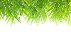 Progettazione di bambù verde del confine della foglia Fotografia Stock