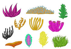 Progettazione di corallo disegnata a mano Fotografia Stock