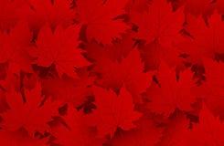Progettazione di giorno del Canada del fondo rosso delle foglie di acero illustrazione vettoriale