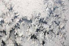 Progettazione di inverno Immagine Stock