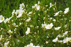progettazione di ispirazione di estate di bellezza del giardino del confine dei fiori Fotografia Stock Libera da Diritti