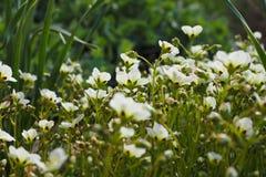 progettazione di ispirazione di estate di bellezza del giardino del confine dei fiori Fotografia Stock