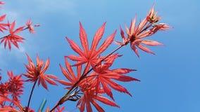 Progettazione di ispirazione di estate di bellezza del giardino del confine del parco dell'albero della pianta Fotografie Stock Libere da Diritti