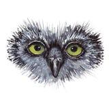Progettazione di massima del gufo del fronte L'uccello è isolato sopra Fotografia Stock