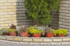 Progettazione di piante in vaso Fotografia Stock