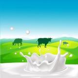 Progettazione di vettore con la mucca, spruzzata del latte Fotografie Stock