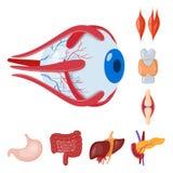 Progettazione di vettore del logo dell'organo e di anatomia Raccolta di anatomia e del simbolo di riserva medico per il web illustrazione di stock