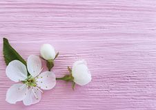 Progettazione fresca su un fondo di legno rosa, molla del fiore di bellezza della ciliegia fotografie stock