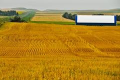 Progettazione geometrica nei campi di frumento dorati Immagini Stock