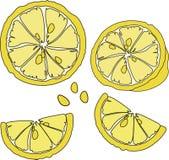 Progettazione luminosa dell'agrume della frutta Fetta gialla succosa dell'agrume immagini stock