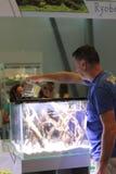 Progettazione matrice dell'acquario della classe La mostra della cucitura moderna di Aqua Terra di terrario e dell'acquario immagine stock