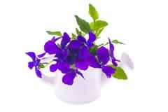 Progettazione-mazzo isolato del giardino dei fiori porpora in wateri bianco Immagine Stock Libera da Diritti