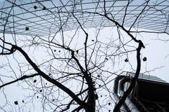 Progettazione moderna astratta del modello della siluetta dell'albero e della costruzione Immagini Stock