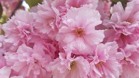 progettazione rosa variopinta di ispirazione di estate di bellezza del giardino del confine dei fiori Immagine Stock