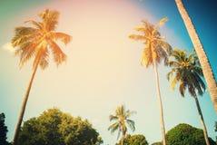 Progettazione tropicale di viaggio della luce di Sun delle palme del fondo Fotografie Stock Libere da Diritti