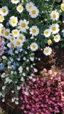 progettazione variopinta di ispirazione di estate di bellezza del giardino del confine dei fiori Fotografie Stock Libere da Diritti